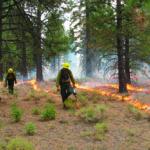Prescribed burn in Klamath National Forest CA. Credit: E. Knapp