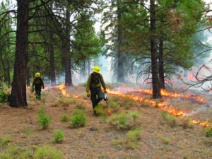 Prescribed-burn-in-Klamath-National-Forest-CA-by-E-Knapp